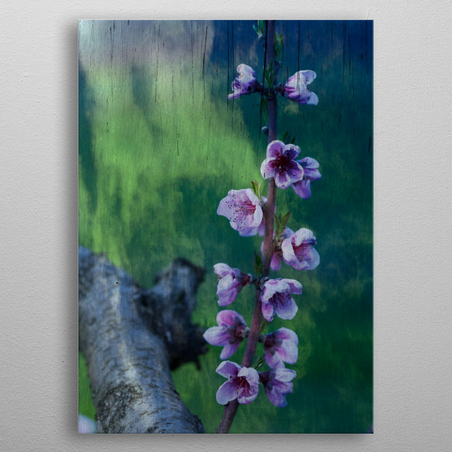 peach blossom metal poster