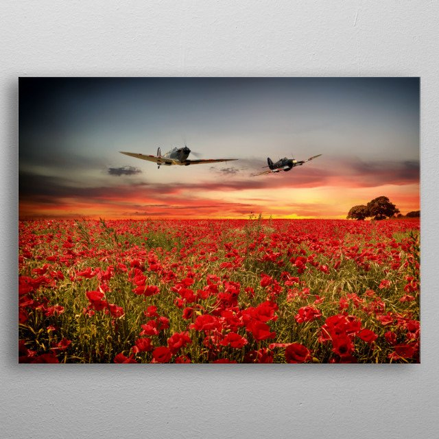 RAF Spitfire and Hurricane fly over a flowering field of poppies. The Supermarine SPitfire and Hawker Hurricane metal poster