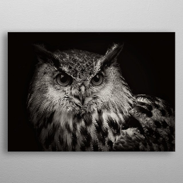 Intensity by Clare Bevan Photography is a mixed media art and photography piece of an Eagle Owl. metal poster