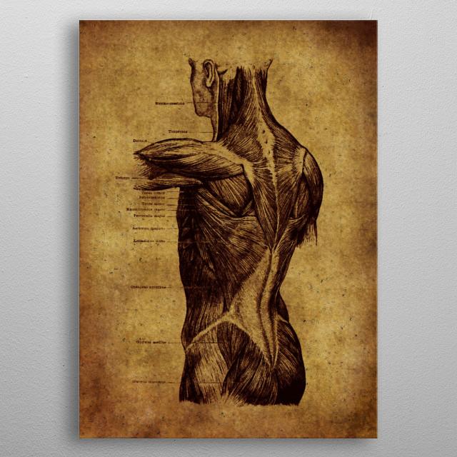 Anatomic22 metal poster