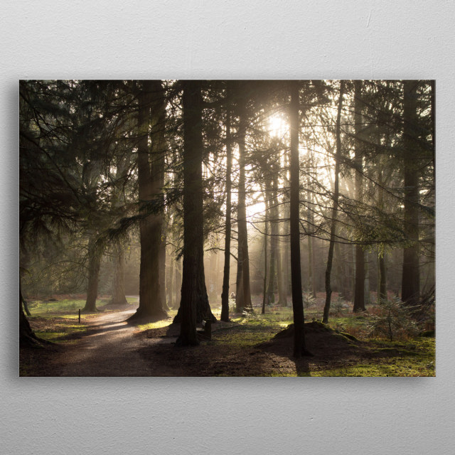 Sun begins to set in the New Forest metal poster