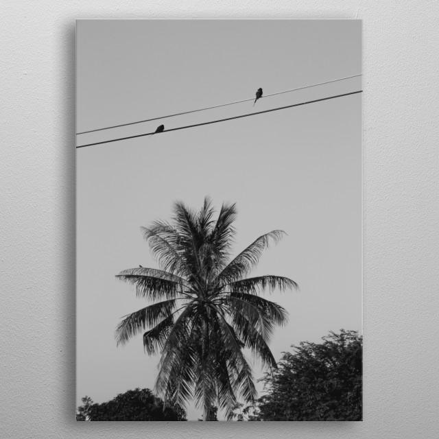 two birds metal poster