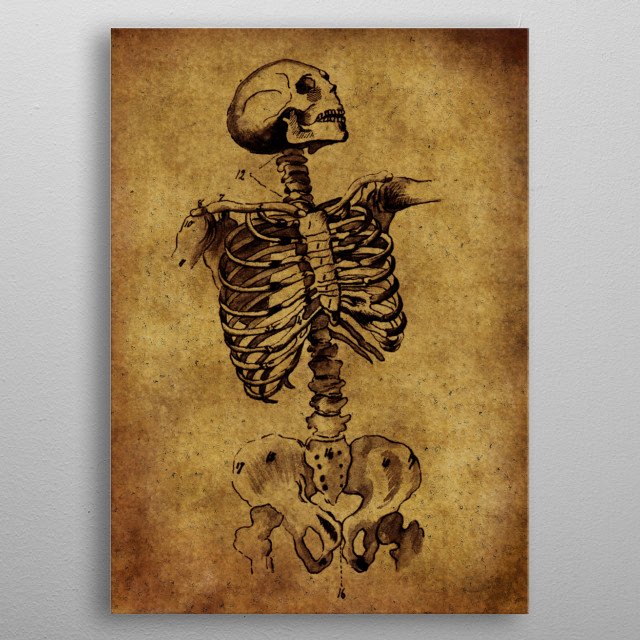High-quality metal print from amazing Anatomic V I N T A G E collection will bring unique style to your space and will show off your personality. metal poster