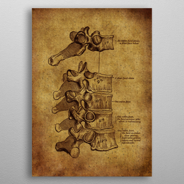 Anatomic65 metal poster