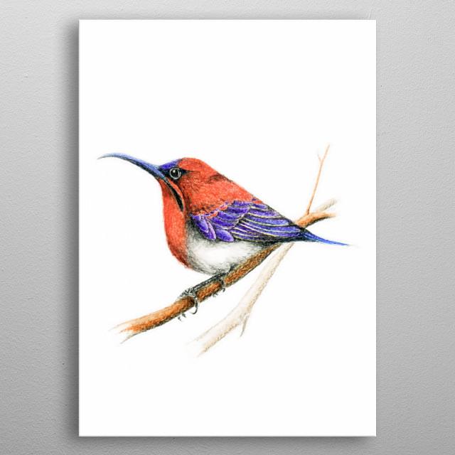 Bird: Sunbird metal poster