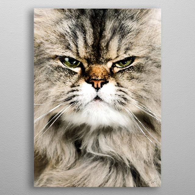 Animals - The Cat metal poster