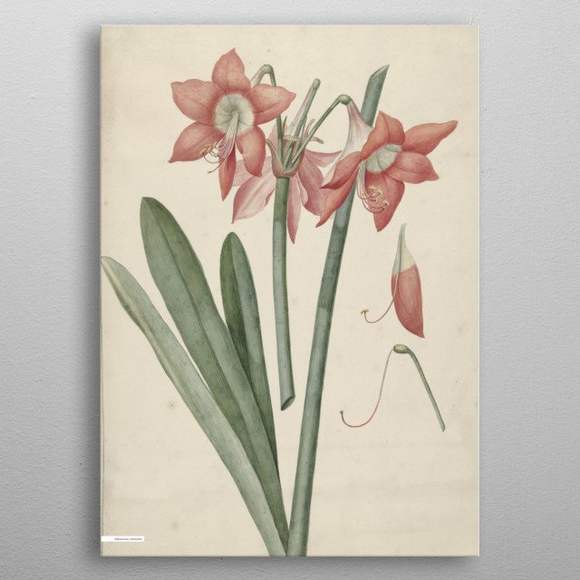Vintage illustration of flowers  metal poster