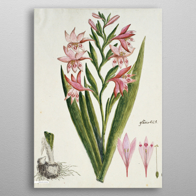 High-quality metal print from amazing Flower Bomb Rijksmuseum collection will bring unique style to your space and will show off your personality. metal poster