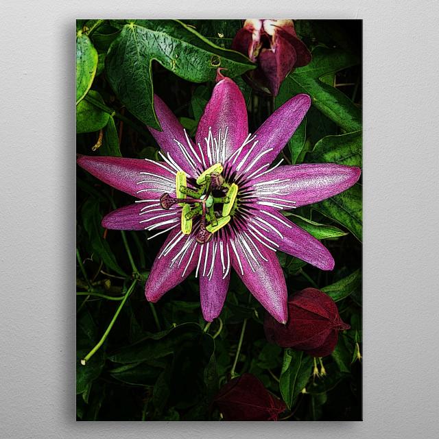 Purple Flower metal poster
