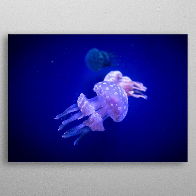 Taken at the Ripley's Aquarium, in Toronto, Ontario, Canada. While faced with the low light conditions, the aquarium is absolutely stunning, and features beautiful creatures of the sea and lakes, throughout the whole property.  metal poster