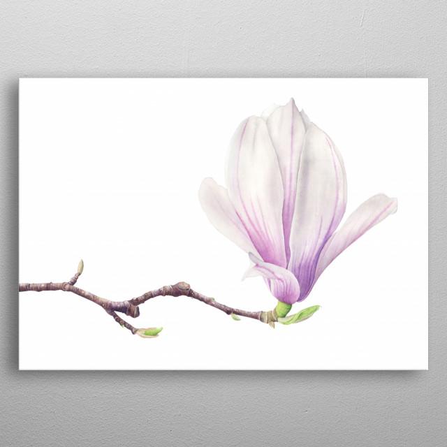 Magnolia Watercolor Illustration metal poster