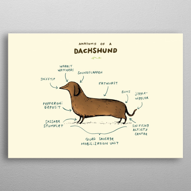 Anatomy of a Dachshund metal poster