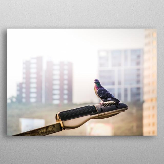 Photograph of an urban pigeon on a street lamp metal poster