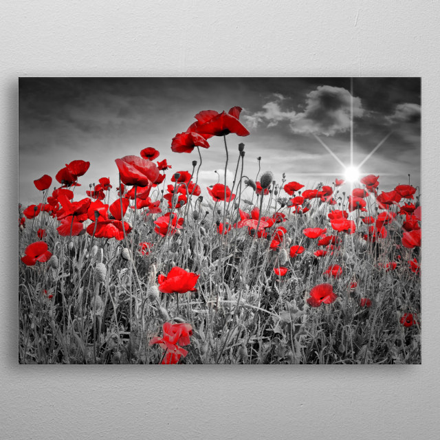 An idyllic field of red poppies fully in bloom and the lovely sun is illuminating the scene. Gorgeous decorative image. metal poster