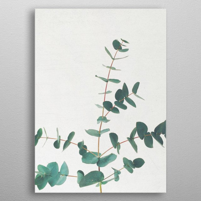 Still life plant photography by Cassia Beck. metal poster