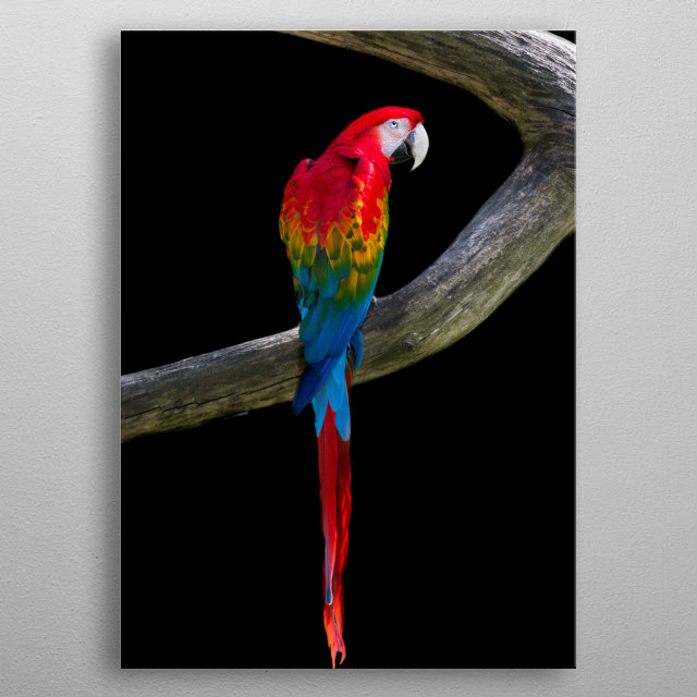 High-quality metal wall art meticulously designed by wildshotss would bring extraordinary style to your room. Hang it & enjoy. metal poster