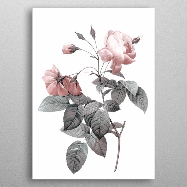 Rose 2  metal poster