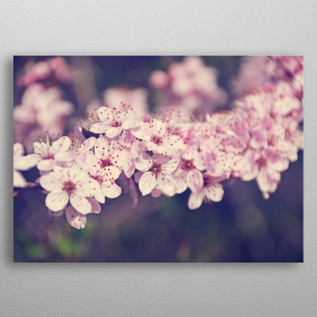 Sweet Cherry Blossom metal poster