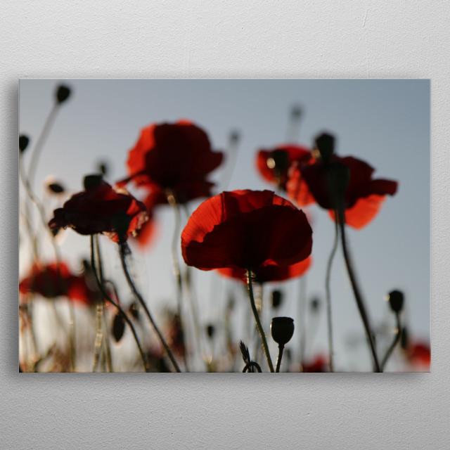 poppy flowers metal poster