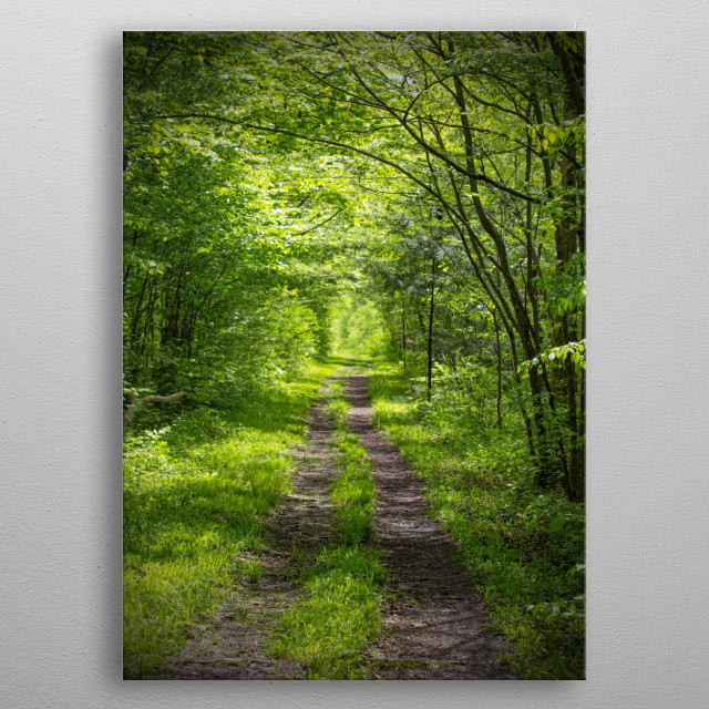 Hiking Trail Through Green Woods in Summer metal poster