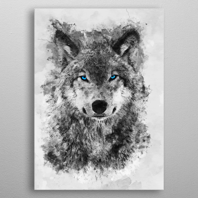 Grey Wolf Blue eyes metal poster