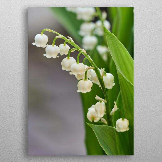 trush in bloom in the garden metal poster