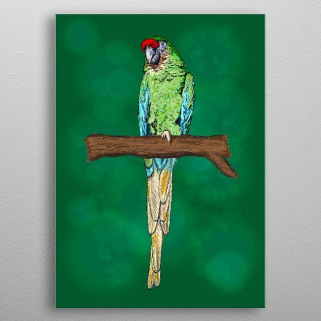 Macaw Parrot Bird Illustration metal poster