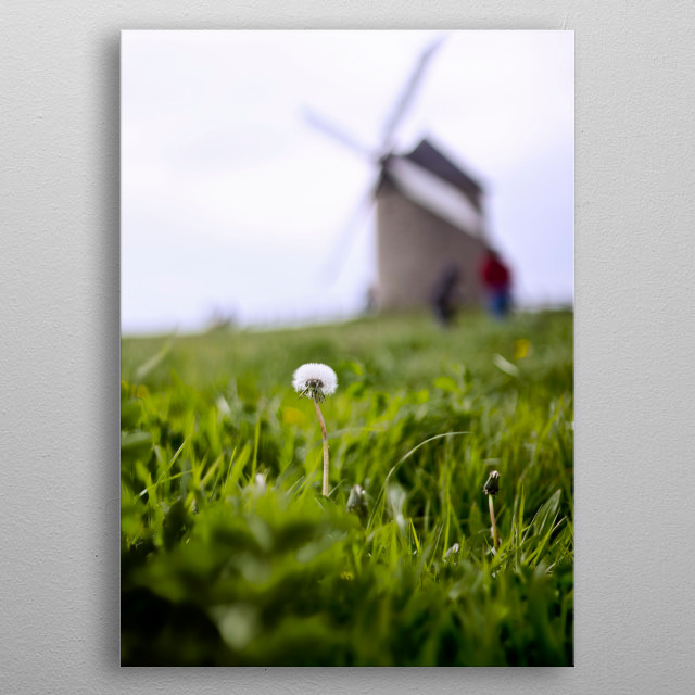 dandelion and mill metal poster