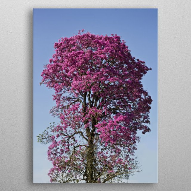 High-quality metal print from amazing Photos collection will bring unique style to your space and will show off your personality. metal poster