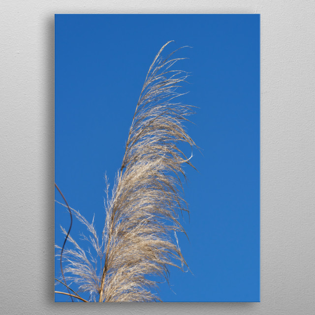 reed in winter metal poster