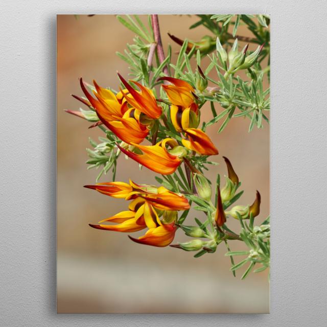 Lotus flower in bloom in the garden metal poster