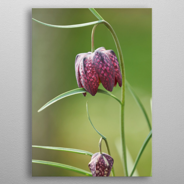 flower in bloom in the garden in spring metal poster