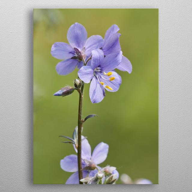 flower in bloom in the garden in spring metal poster