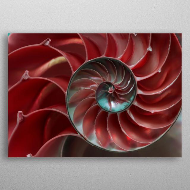 Red ammonite closeup metal poster