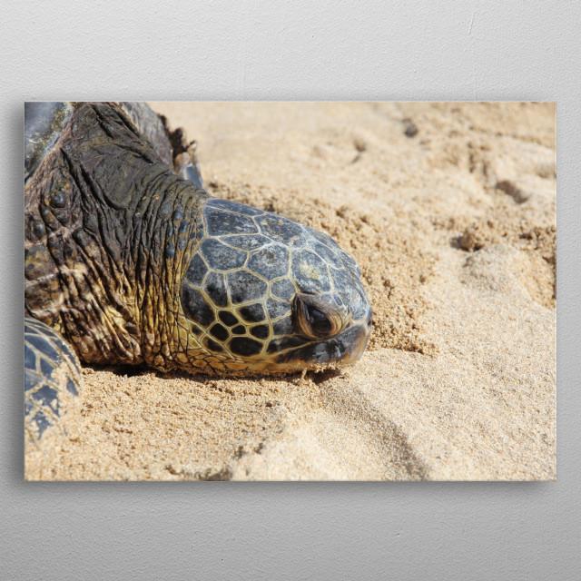 Turtle On Beach Metal Poster