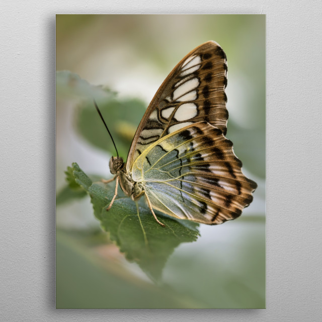 Pretty exotic butterfly metal poster