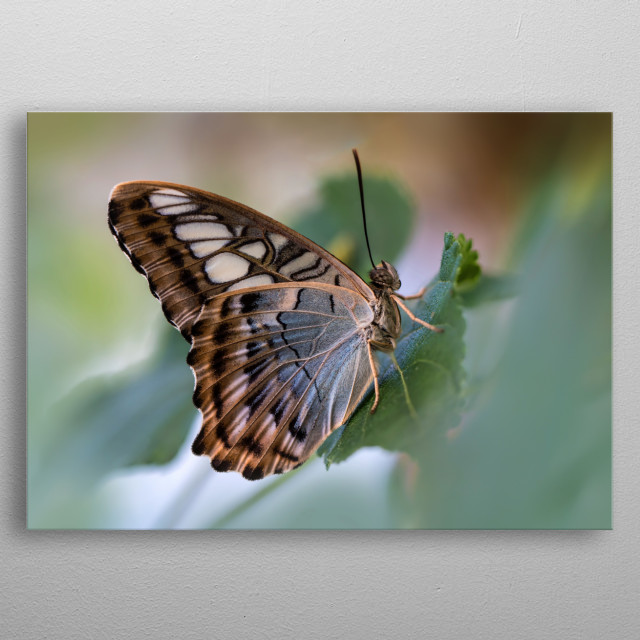 Exotic butterfly on leaf metal poster