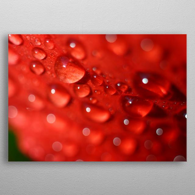 Dew on the scarlet petal metal poster