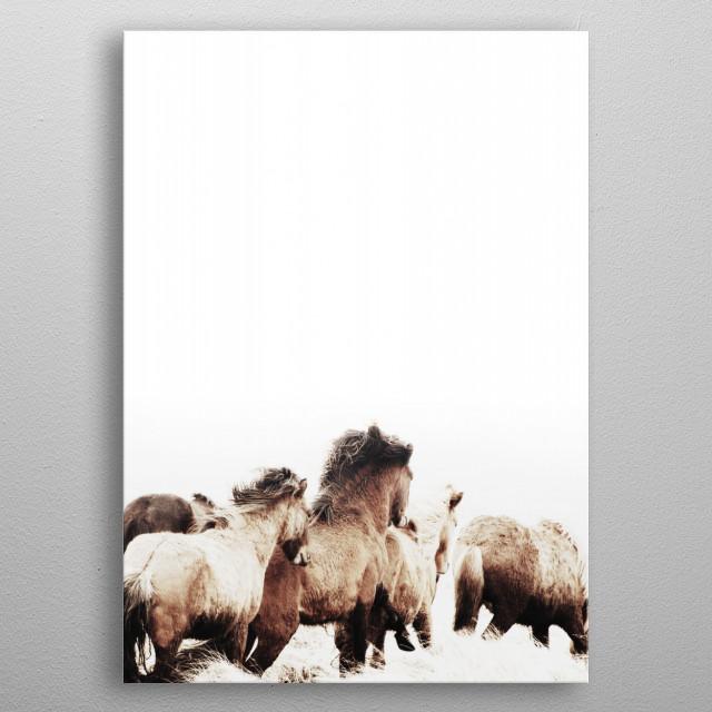 ICELANDIC HORSES 2 metal poster