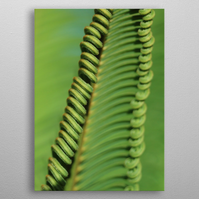 Curly palm branch metal poster