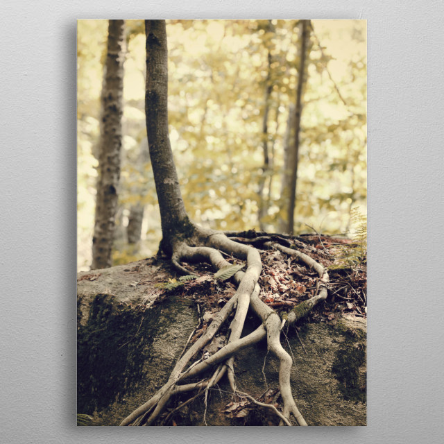 Tree Roots Over a Rock metal poster