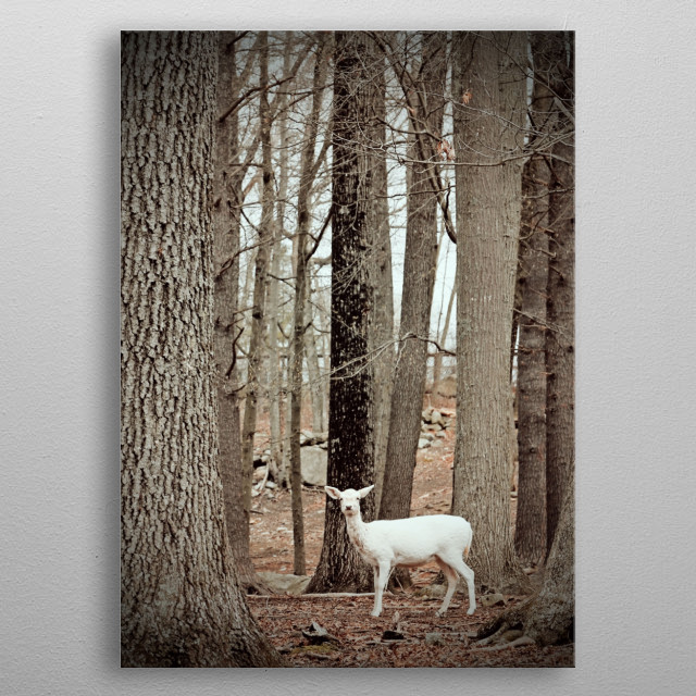 High-quality metal print from amazing Animals And Critters collection will bring unique style to your space and will show off your personality. metal poster