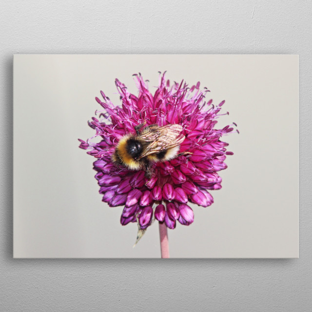 Bee Perfect by Clare Bevan metal poster