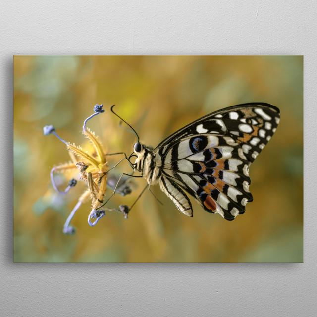 Papilio Demoleus butterfly metal poster