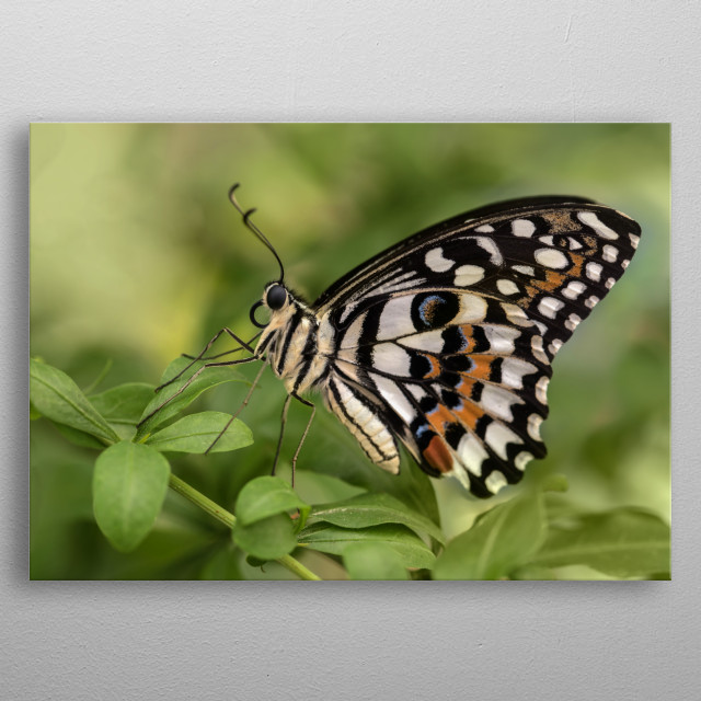 Pretty detailed butterfly metal poster