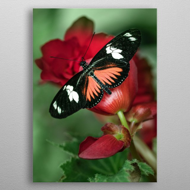 Pretty butterfly on plant metal poster