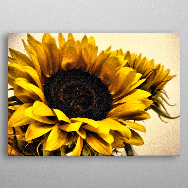 Glorious Sunflowers 2 metal poster