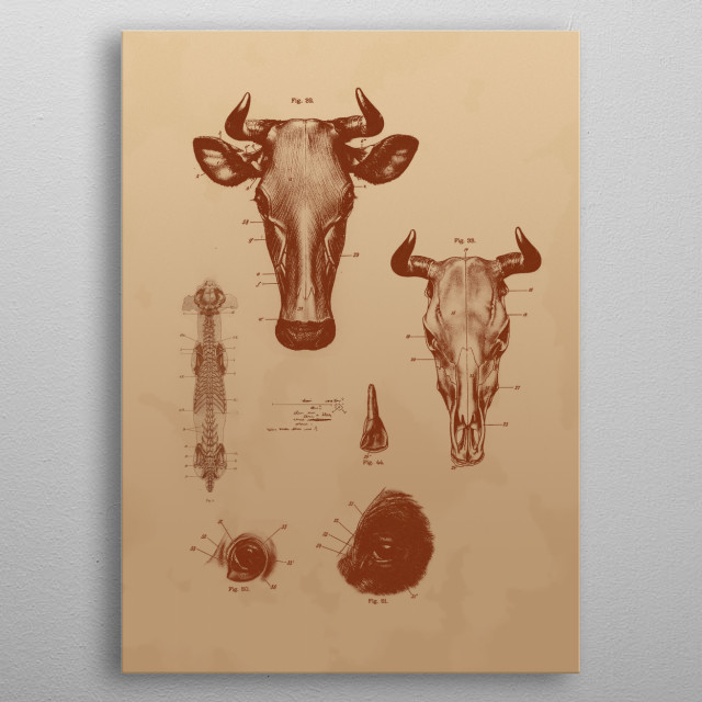 Bull's Head metal poster