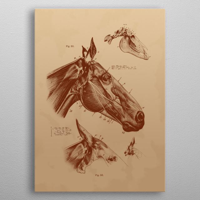 Horse metal poster