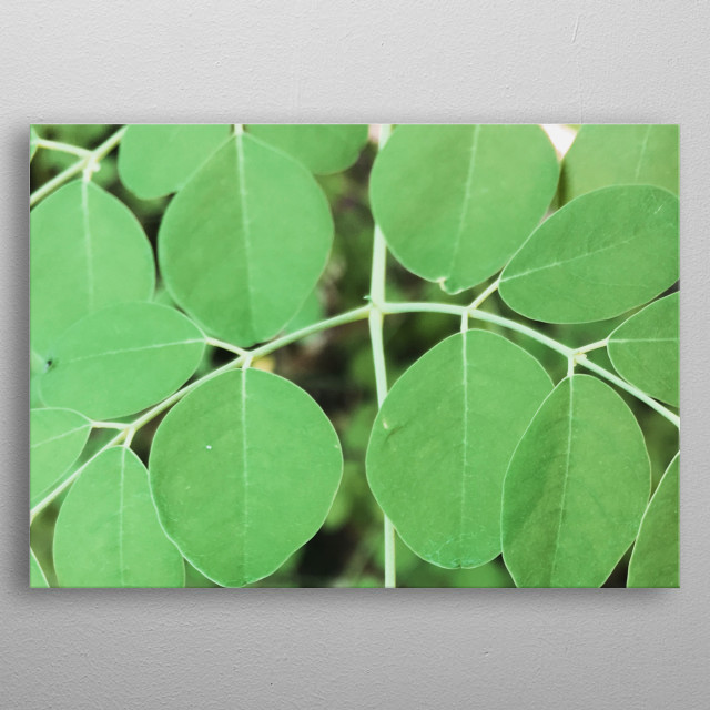 Round Leaves  Photo Art by Enrique Anonat III  metal poster